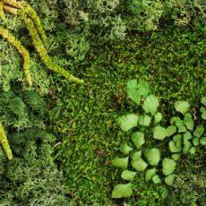 Cuadros de musgo preservado estilo natural