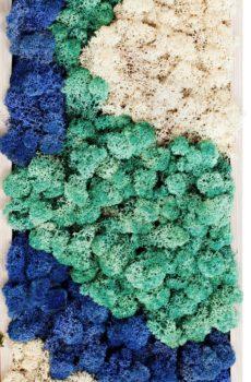 Cuadros de musgo preservado colores