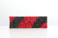 Cuadro de musgo rojo y negro