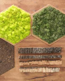 Formas de musgo preservado