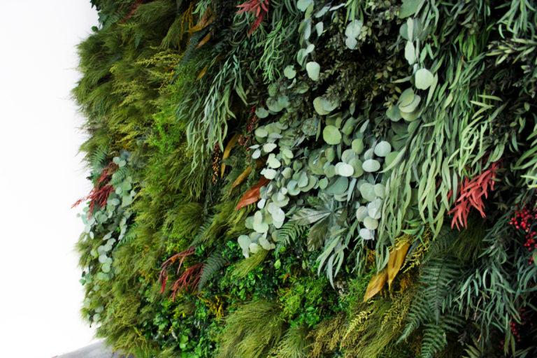 Plantas preservadas