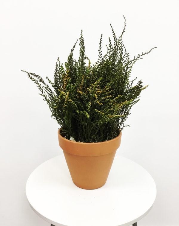 Maceta planta preservada