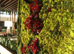 Detalle jardín vertical con liquen