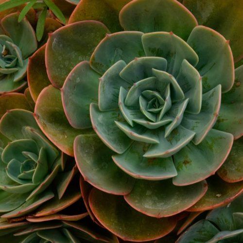 botanical-cacti-cactus-1011302